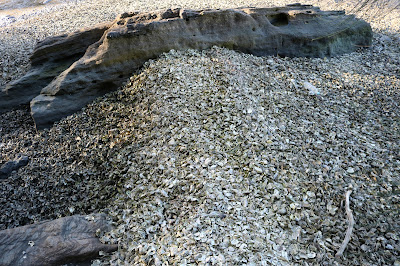 Oyster Shells in the Georges River
