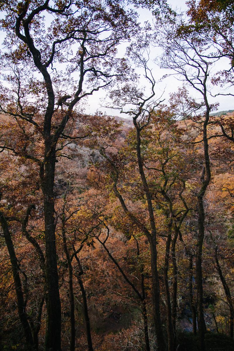 Autumnal Adventures - Ystradfellte Waterfalls