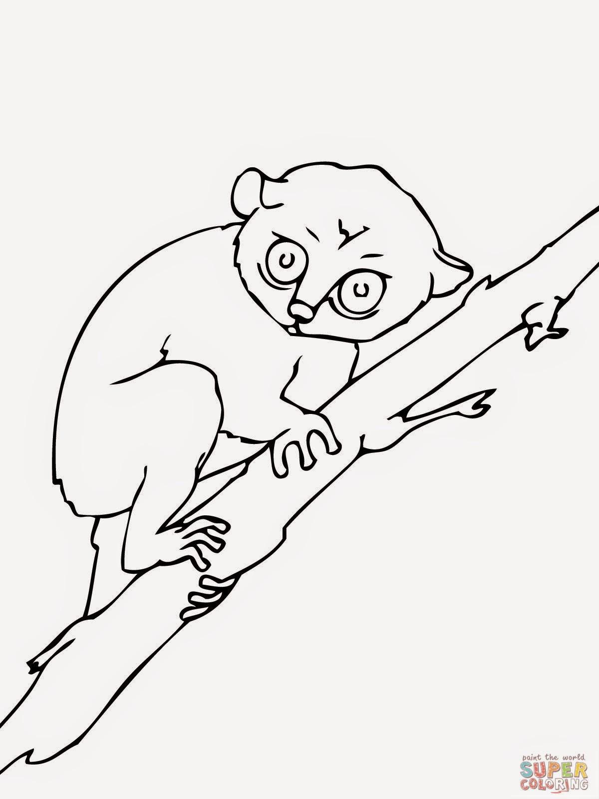 La Chachipedia Loris Tarseros Y Lemures Para Colorear