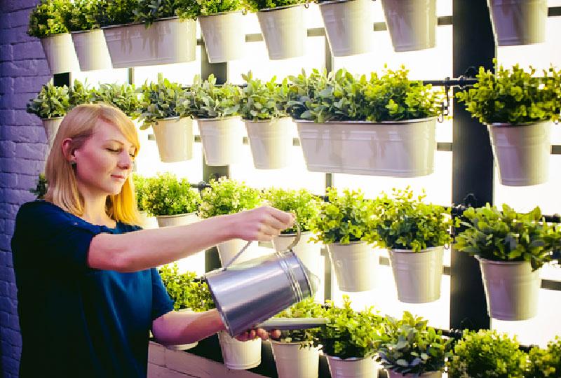 Indoor Vertical Plants