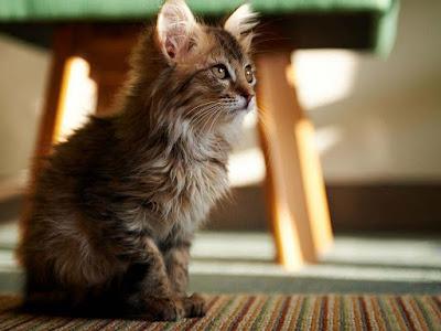 mix-color-cat-billi-kitten-sitting-walls
