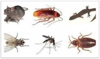 ইদুর, তেলাপোকা, টিপস,মাছি, ছারপোকা, টিকটিকি,মশা,rat,cockroach, tips, flies, grasshoppers, lizards, mosquitoes