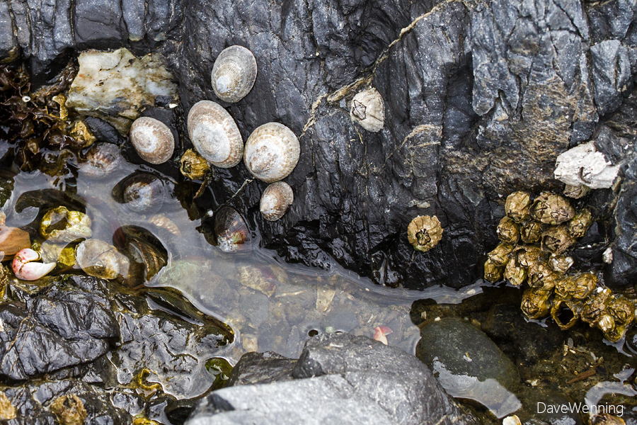 Mask Limpets