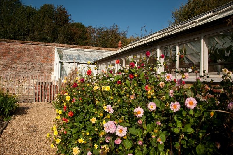jardin amurallado y flores de dalia