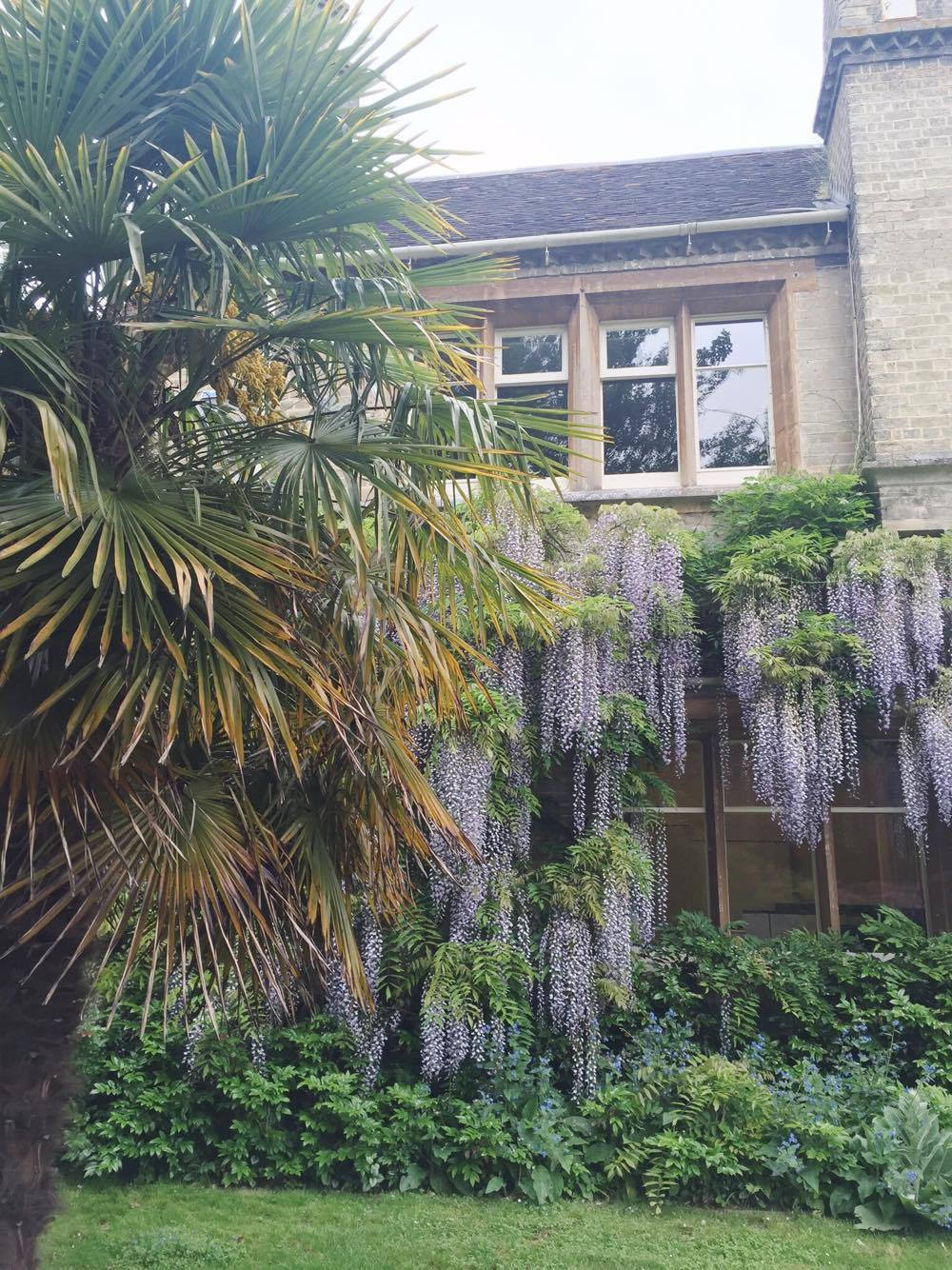 RSPB-Wisteria-House-Palm-Tree