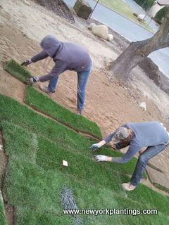 New York Plantings Gardeners aligning sod layers to front yard in Long Island
