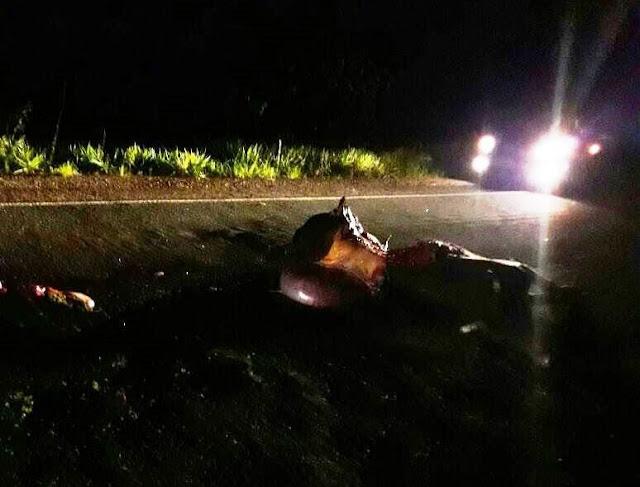 Condutor bate em boi na rodovia, por pouco não acontece uma tragédia