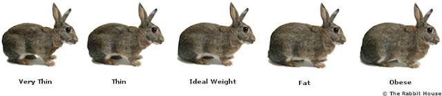rabbit weight chart