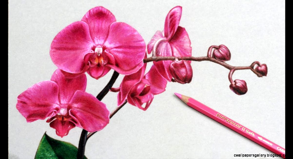 Simple Flower Drawing Colorful | Wallpapers Gallery