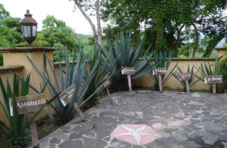 hacienda_raicilla