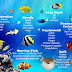 Tips How to Caring for Saltwater Fish