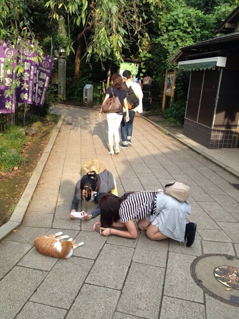 Lazy cat taking a pic