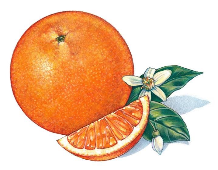 Christmas Joy!: The Christmas Orange by Laura Martin-Buhler