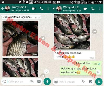 Essen Ikan Mas Di Empang Dari Master Essen