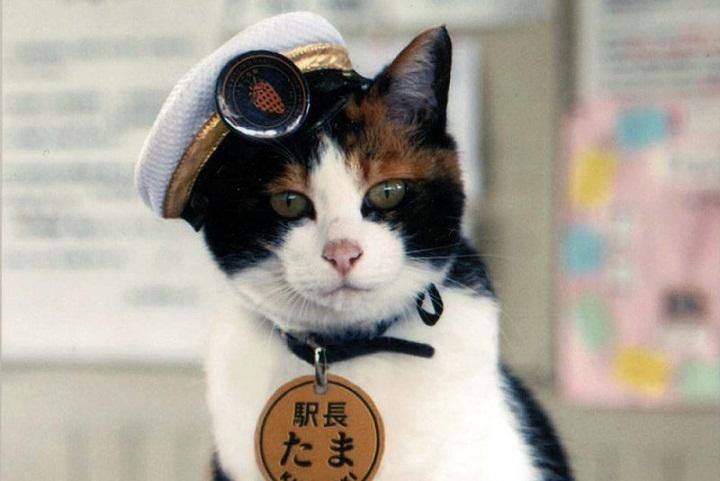 Kucing Ini Menjadi Kepala Stasiun Kereta Api di Jepang