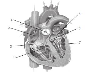 Materi ajar ipa tentang bagian bagian dan cara kerja jantung pada manusia
