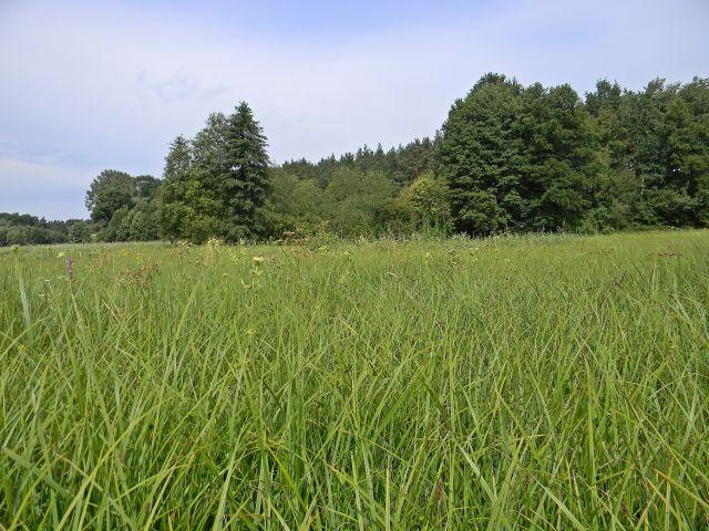 trawa, łąki, rośliny łąk