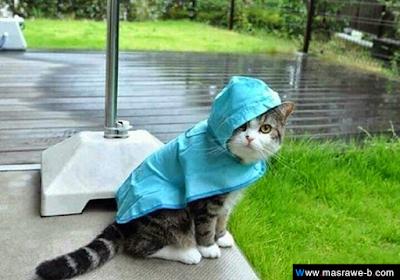 صور صور قطط كيوت 2020 خلفيات قطط جميلة جدا cats4.png