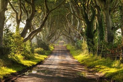 Keindahan Pepohon Sepanjang Jalan