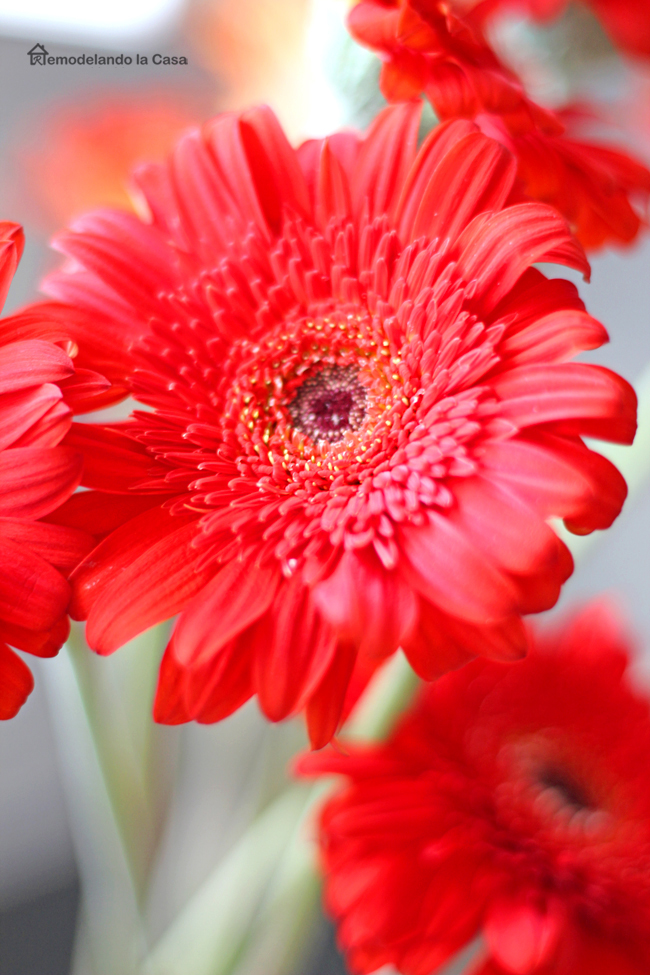 Red/orange gerbera daisies in kitchen counter