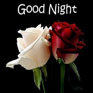 Beautiful Red & White Rose Good Night Flowers