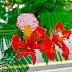 Nantian Tropical Botanical Garden!