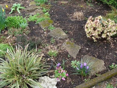 Front Borders That We Covered In Newspaper And Mulch Use Purchased Garden Compost For Our Last Summer There Are Just A Few Weeds Which