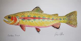 Golden Trout, Pat Kellner, P. H. Kellner, Fishing Art, Fly Fishing Art, Texas Freshwater Fly Fishing, TFFF, Fly Fishing Texas, Texas Fly Fishing