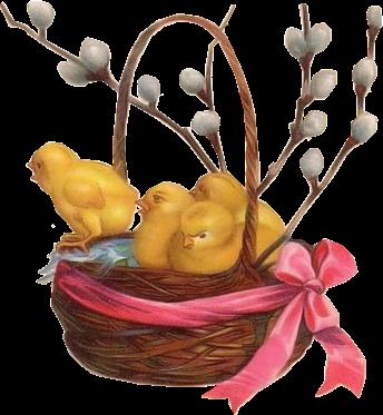 cesto con pollitos