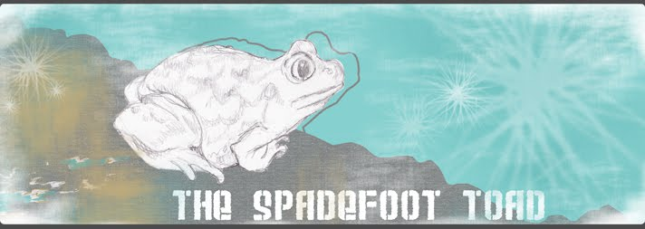 The Spadefoot Toad