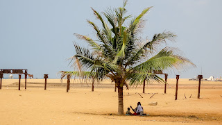 Togo Family sits at the beach at a palm