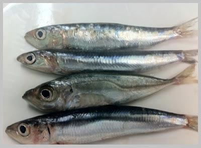 sardina con vitamina D