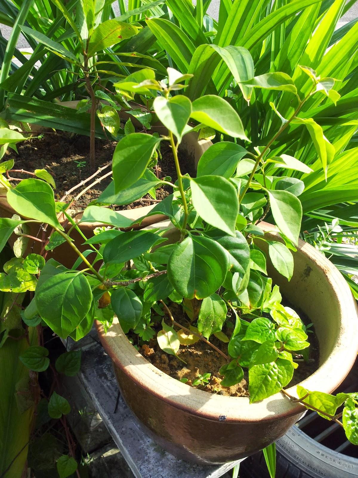 E-NA LOVELY KITCHEN ^_^: Pokok Bunga Kertas
