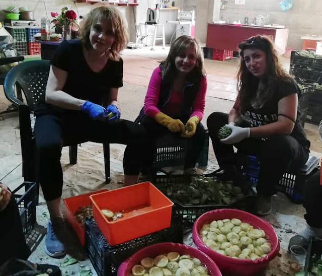 Πυρετώδεις προετοιμασίες για την γιορτή της Αγκινάρας το Σάββατο στα Ίρια