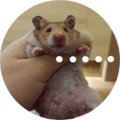 Hamster's Daily - Satisfiy all your Life