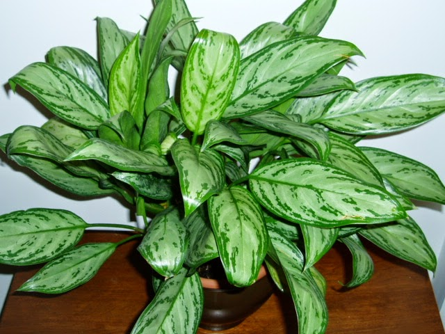 Botanical discoveries 10 nice house plants to clean your house according to the nasa research - Nice indoor plants ...