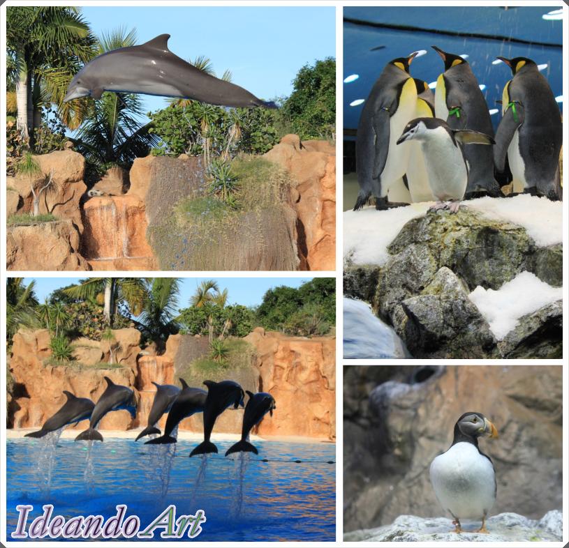 Animales Loro Parque