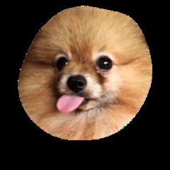 Alfa the Dog