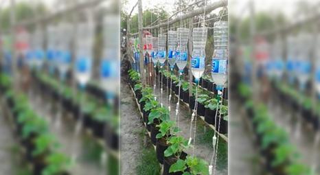 Berkebun Sayur Di Polybag,  Di halaman Rumah