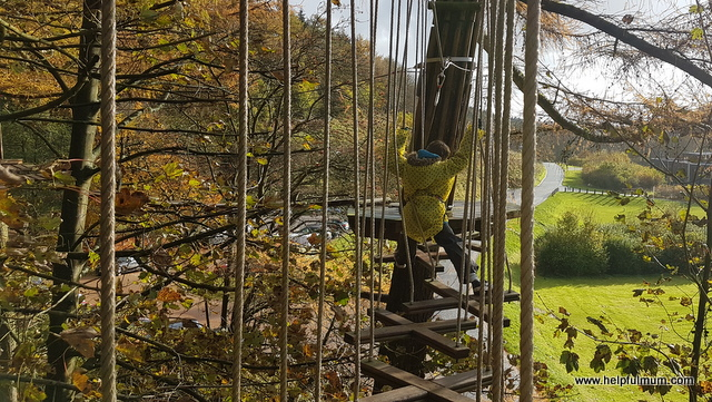 Go Ape Treetop Trek