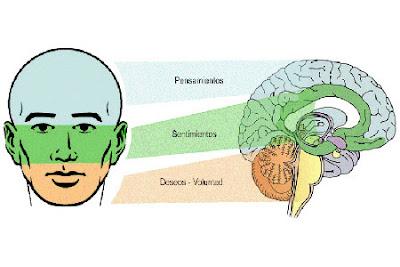 Muchas ciencias derivan de la biometria, una de ellas es la morfosicologia