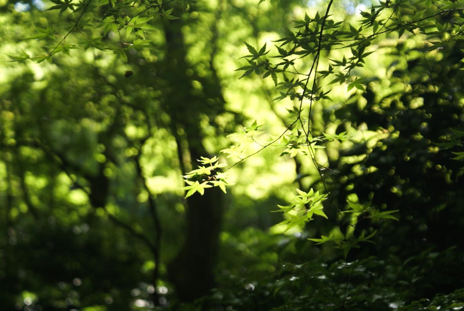 arashiyama kyoto japan gioji maple leaf spring