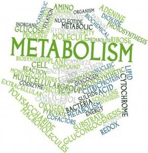 Menyeimbangkan Sistem Metabolisme