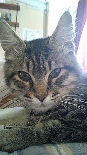 gato orejas paradas