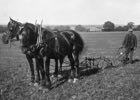 Photograph of Jack Honour ploughing September 1914 Image from the Images of North Mymms Collection