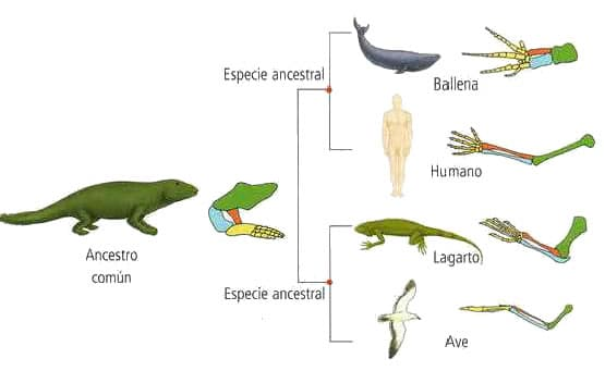 PORTAFOLIO DIGITAL: Anatomia comparada