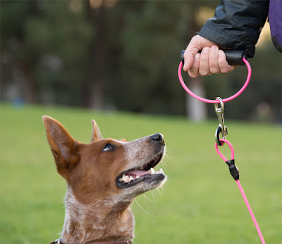 Chew-proof steel cable leash