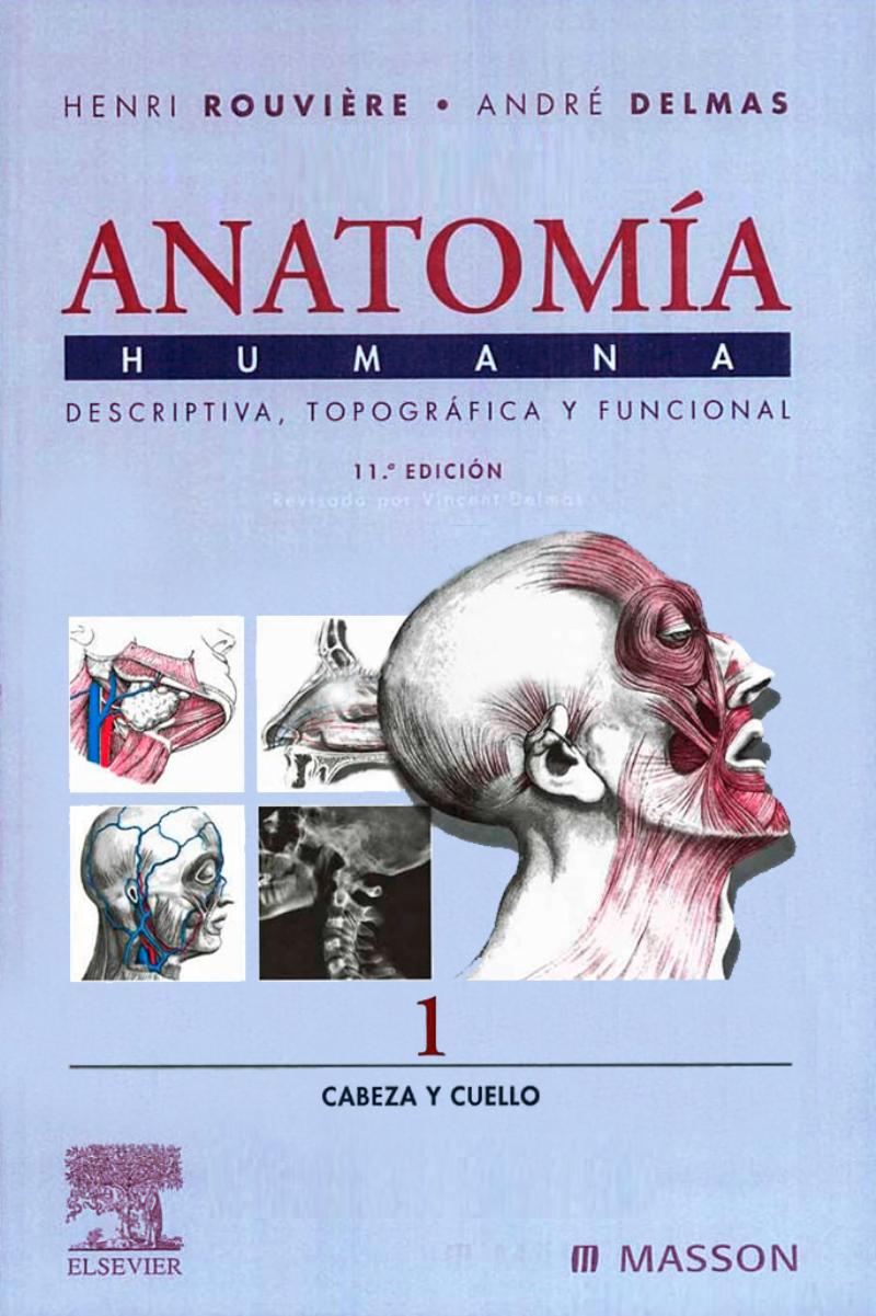 Anatomía Humana. Tomo 1: Cabeza y cuello, 11va Edición – Henri ...