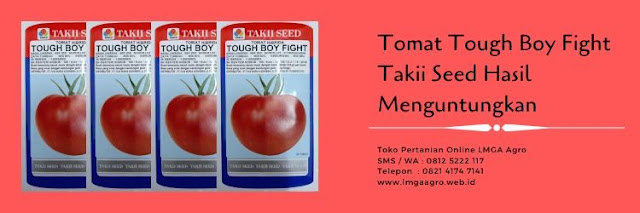 benih tomat tough boy fight,tomat tough boy fight,benih tomat,budidaya tomat,lmga agro
