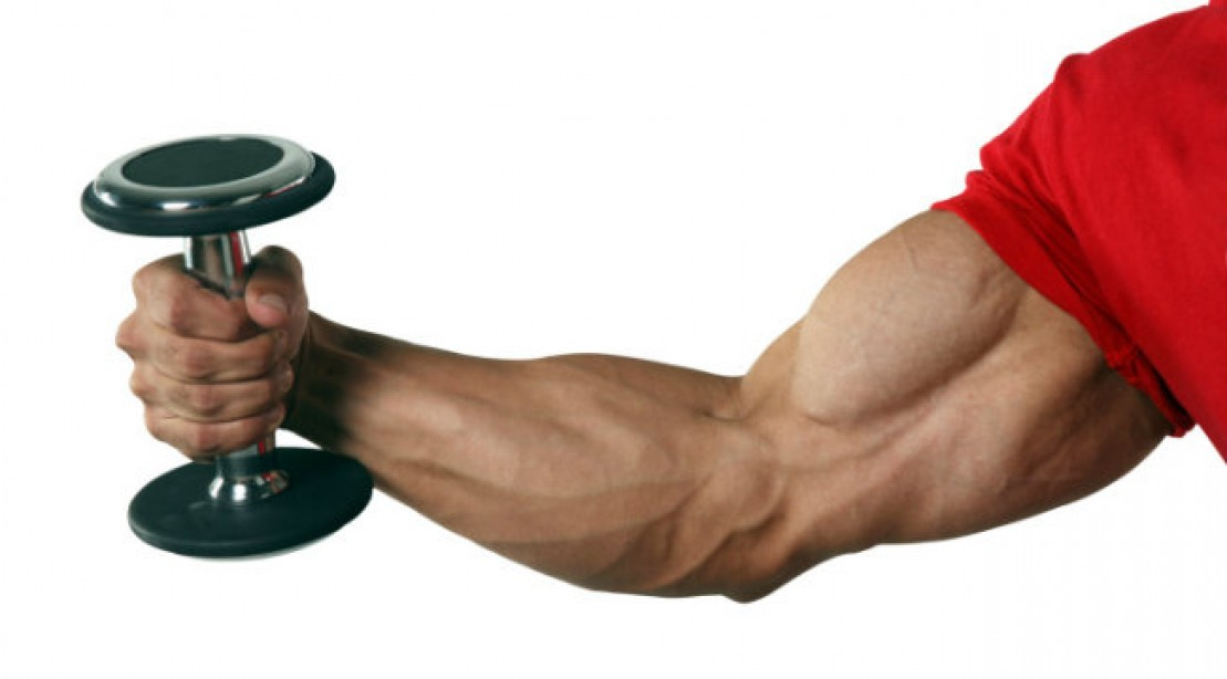 how to build muscle in ur arms